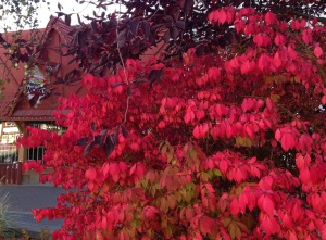The mingling of reds