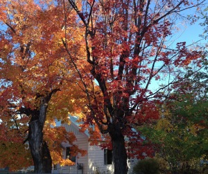 Autumn foliage against a blue metal roof